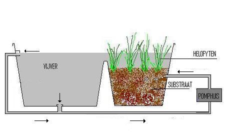 Natuurlijke Vijverfilters Of Helofyten Filters Colanikoi